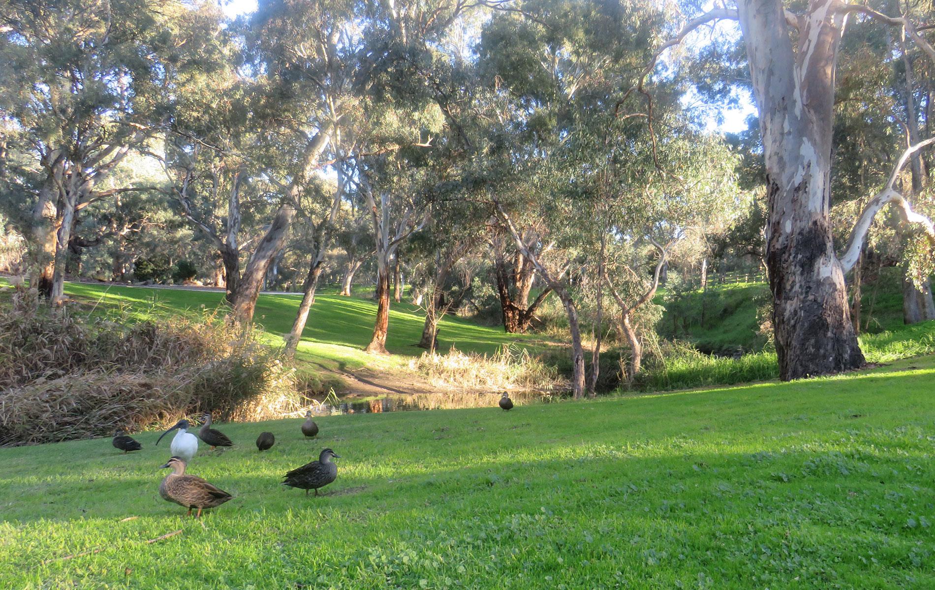 Rental Properties   Linear Park